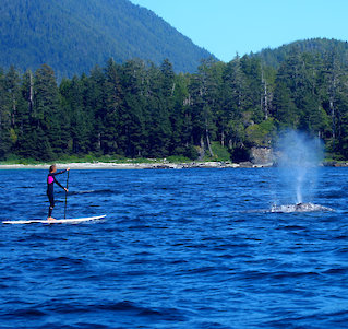 Tofino Stand Up Paddler passes whale in Tofino